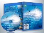 蓝光电影 25G 14805 【BBC:大自然不可思议的入侵】2009